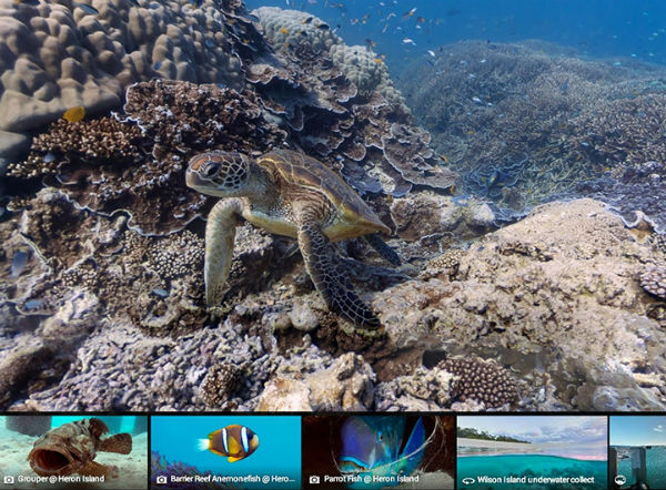 google-maps-coral-reef